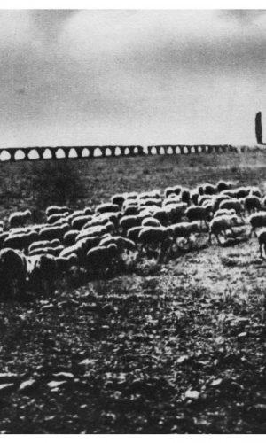 Campagna Romana – dagherrotipo(foto) del 1860