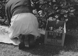 Spring in Berkeley, 1952 (Dorothea Lange)