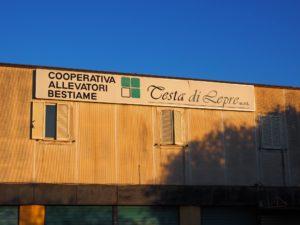 """BIVIO DI FREGENE- Coop.Allevatori Bestiame """"TESTA DI LEPRE"""""""