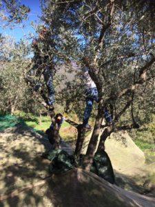 olio extravergine di oliva del Lazio
