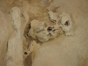 CASTEL DI GUIDO-La Polledrara di Cecanibbio- MUSEO PALEONTOLOGICO