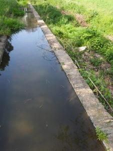 I Fontanili della Campagna Romana-Fontanile di via Testa di Lepre e i sui pesci rossi