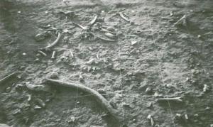 Castel di Guido- Ottava Campagna di scavo-Superficie di calpestio con i resti lasciati dall'Uomo