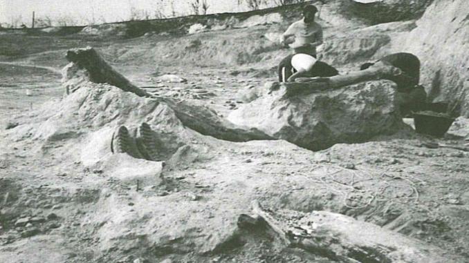 Castel di Guido- Ottava Campagna di scavo-Resti ossei contenuti nella Tufite.