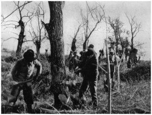 Maccarese -Lavori di disboscamento 1925-
