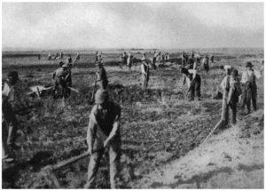 Maccarese -Operazione manuale di livellamento del terreno 1928-